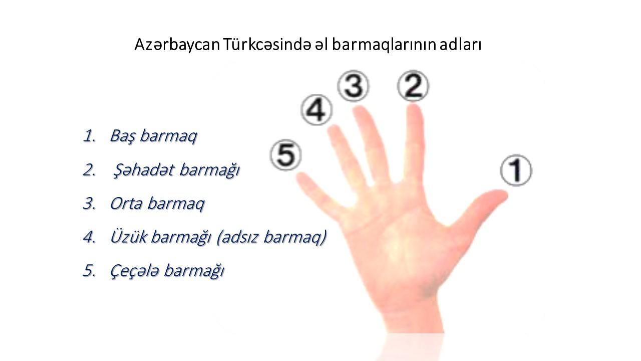 نام انگشتان دست، نام انگشتها، نام انگشت، انگشتان دست، آذری، فارسی، ترکی